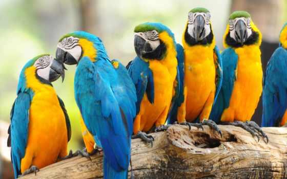 zhivotnye, попугаи, монитор