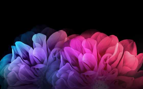 cvety, fone, красочные, full, лепестки, темном,