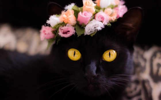 кот, картинка, abyss, роза, фон, взгляд, глаза, смотреть
