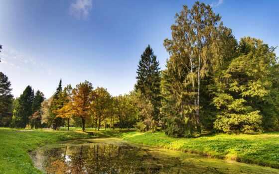 петербург, россия, санкт, природа, дерево, пруд, картинка