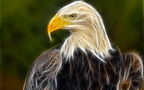 орлан, полном, животные