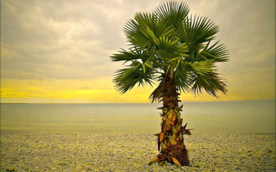 full, море, palm, широкоформатные,