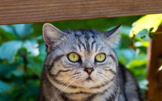 кот, картинка, бесплатную