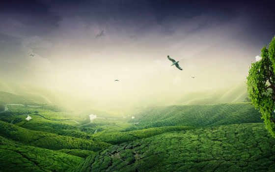 зелёный, landscape, desktop