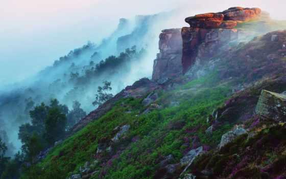 горы, туман, утро, лес, свет, цветы, склон, камни, трава,