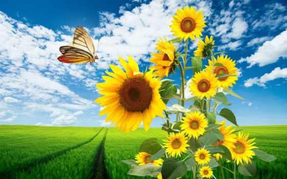 summer, поле, подсолнухи, подсолнух, года, time, установить, winter, сказ, природа,