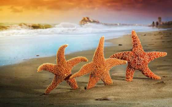 звезды, морские, песок, море, пляж, summer, трио,