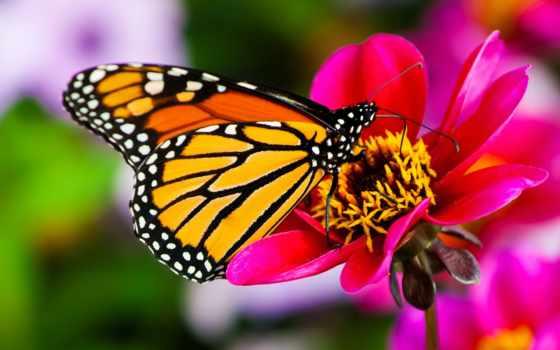 бабочек, бабочки, тропических, живых, тропические, выставка, biglion, живые, купить, скидки, выставки,