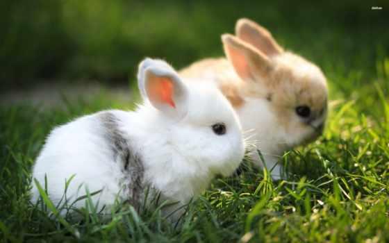заставки, кролики, фоны, one, click, милые, everything, фоновые, траве, телефон, пушистые,