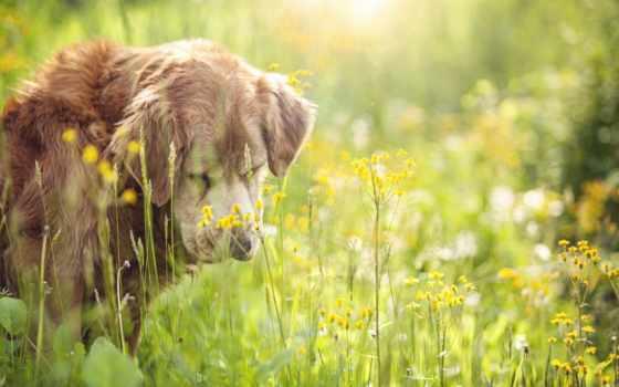 frases, para, con, summer, tristes, amor, tarjetas, друг, собака, postales, perro,