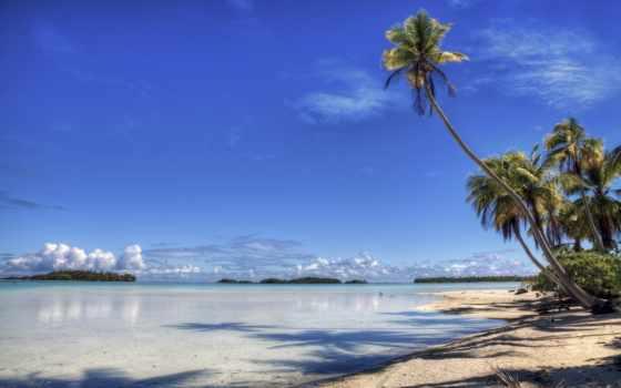 пляж, берег, море, palm, пальмы, широкоформатные, остров, взгляд, под, небо, рай,