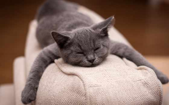 кот, sleeping, кота