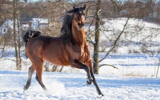 коллекция, лошадь