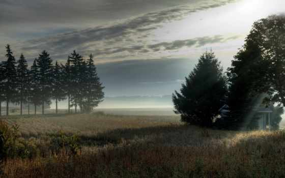 туман, природа, утро