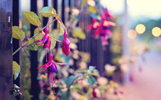 макро, цветы, улица