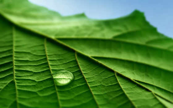 листе, трава, korovka, капля, божья, promethean,