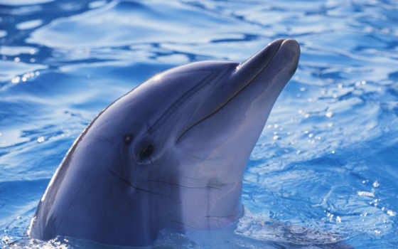 дельфины, дельфин, дельфинами