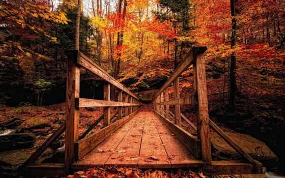осень, осенними, природа, wooden, мост, страница, аллея, листьями, along,