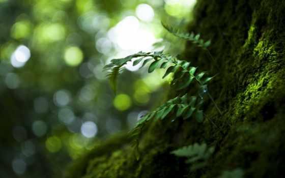 природа, art, макро, desktop, high, зелёный, miscellaneous,