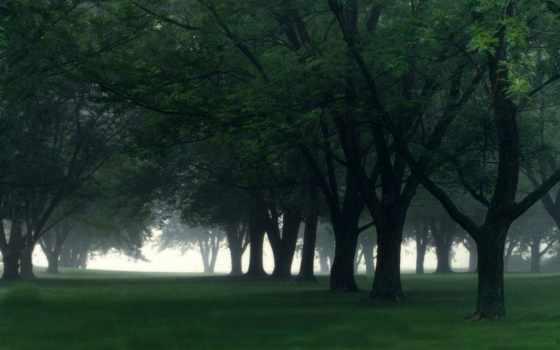 трава, природа, screensaver, rainy, дождь, windows, зелёный, лес,