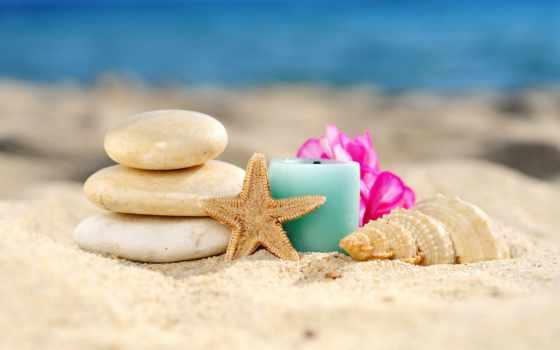 песок, пляж, seashell
