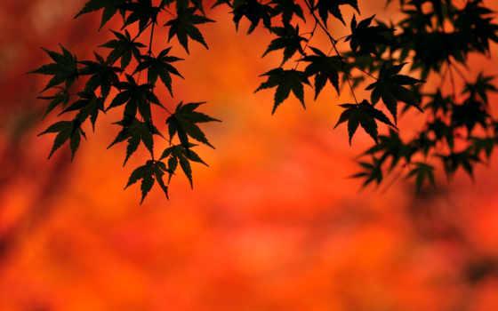 золотые, пейзажи -, тени, fond, закатами, рассветами,