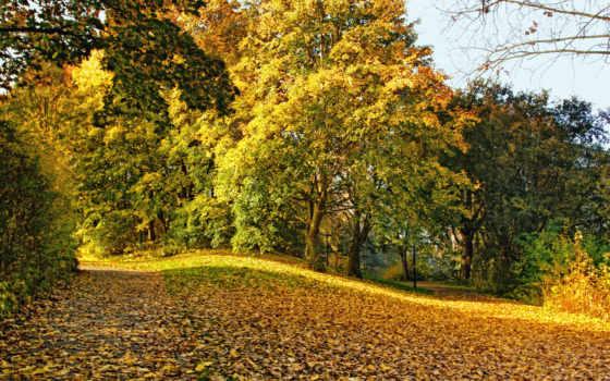 осень, дорога, листва, пейзажи -, осколками, золотую, желтые, trees, den, изогнутых, информация,