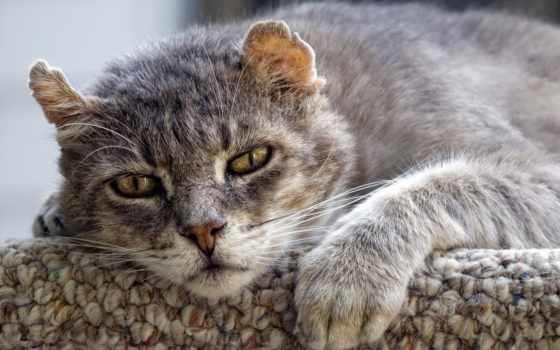 кошки, лет, кошек, кот, живут, maintenance, кошку, за, старой, старая, aging,