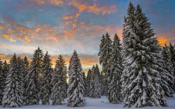 winter, утро, швейцария, снег, лес, swiss, места, clouds, природой, imgator,