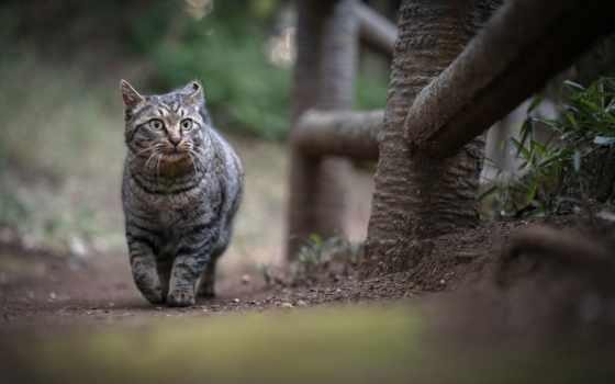 кот, point, ganref, прогулка
