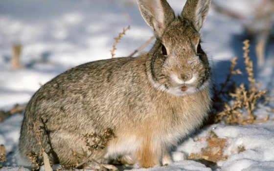 заяц, зайцы Фон № 6282 разрешение 1920x1200