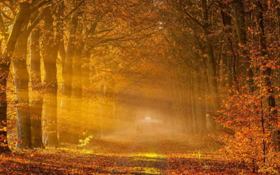 осень, landscape, дорога