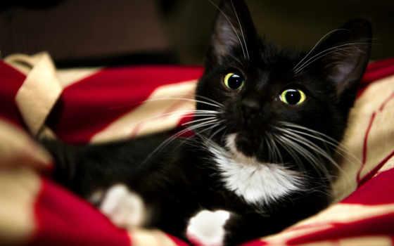 black, кот, котенок