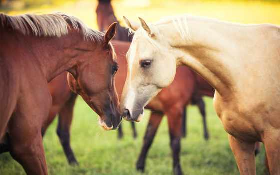 лошади, zhivotnye, кони