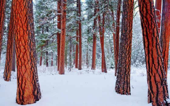 природа, winter, browse, лес, снег, рассвет, горы, страница, trees,