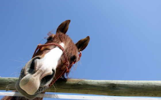 лошадь, браун, black, full, animal, фон, изображение,