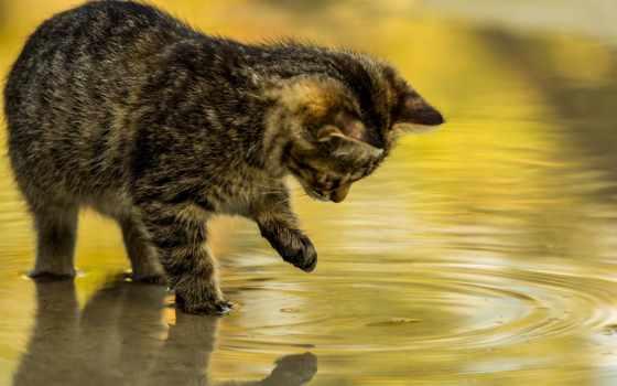 кошки, кот, котенок