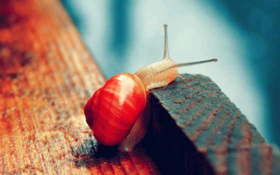 ,, красный, макросъемка, лист, still life photography, snails and slugs, улитка, дерево, d