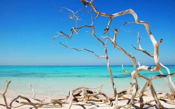 кубик, море, качественные, природа, trees, оригинала, берег, заставка, summer, пляж, ocean,