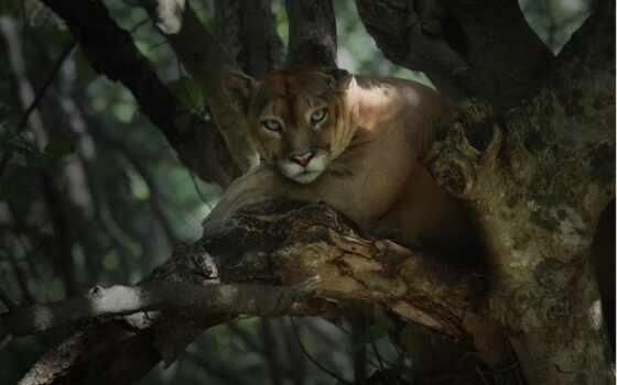 дерево, lion, side, владимир, patel, который, narrow, panthera, хороший, ложь