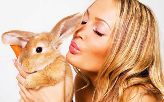 bunnies, кроликом