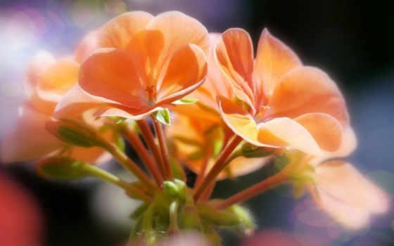широкоформатные, цветы