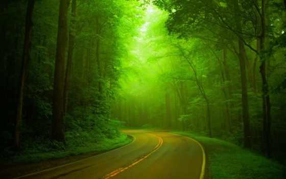 природа, landscape, зелёный