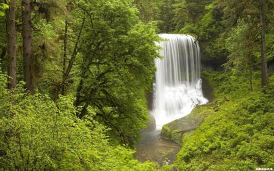 природа, лес, обоях