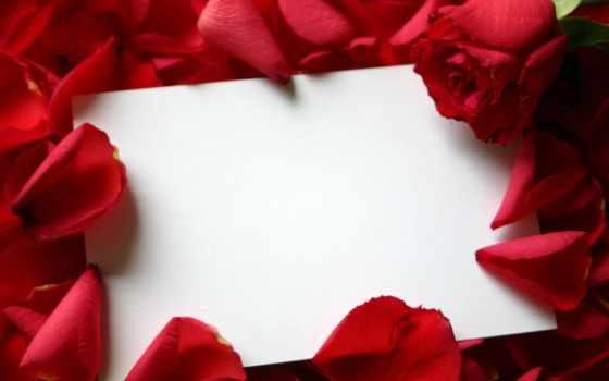 рамки, розы, поздравлений