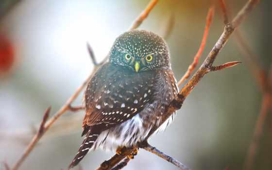 птица, сова, природа