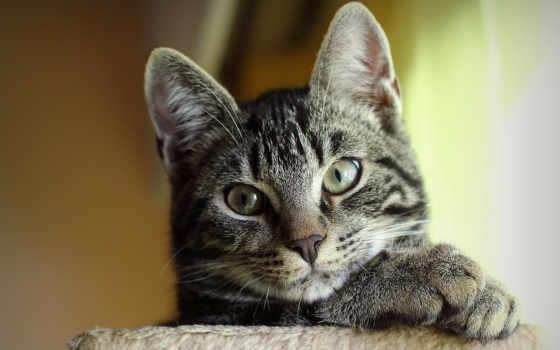кот, серый, file, изображение, views, hitgid, size, name, resolution, кб, details,