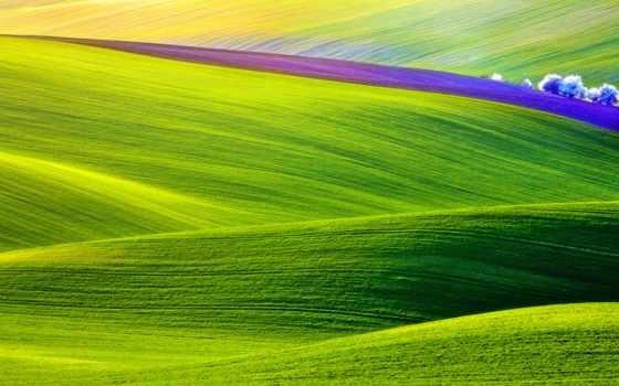 ,, пастбище, зеленый, поле, экосистема, прерия, луг, трава, небо, атмосфера, простой, 4k resolution,