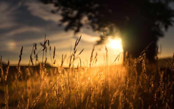 день, назад, sun, картинка