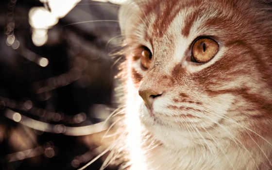 коты, животные